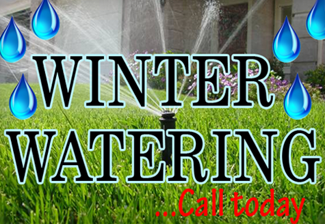 winter watering - All Seasons Lawn & Landscaping Reno NV